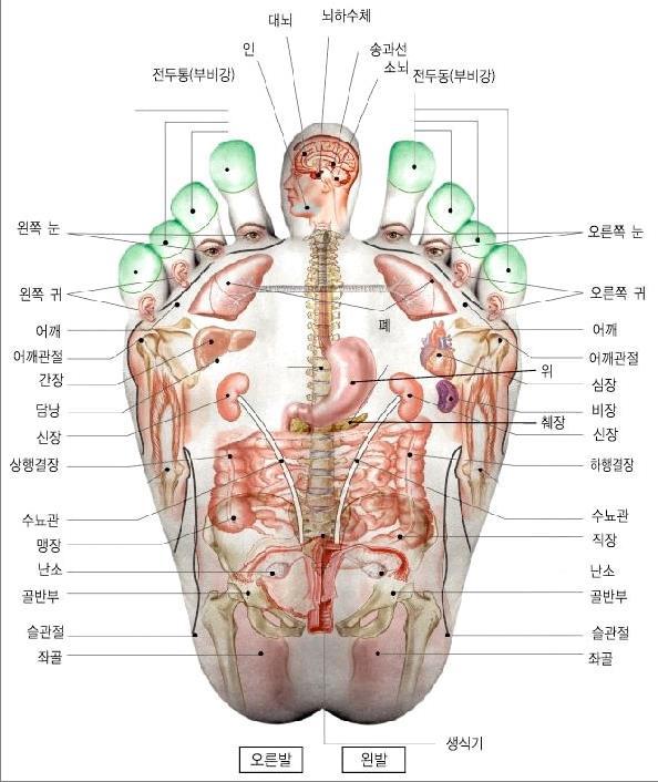 FOOT massage. Рефлексология стопы